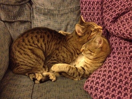 Sleep Hug