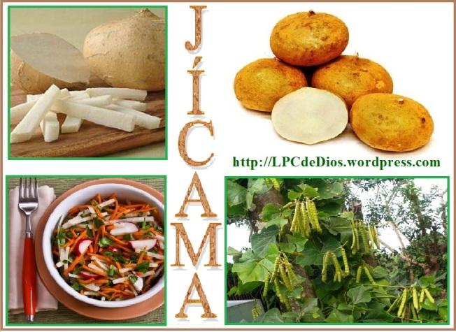 jicama clspanish