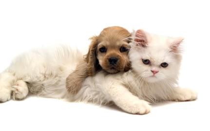mascotas bienestar felicidad